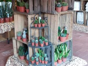 cactussen1